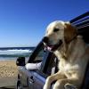 Dog Traveling Tips