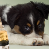 Puppy Vaccines