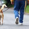 Joys of Walking Your Dog