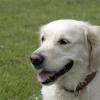 Canine Distemper Symptoms & Prevention