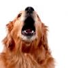 Barking, Barking, Barking
