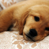 Treatment and Home Remedies For Dog Diarrhea