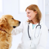 Seizures in Dogs