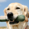 Common Dental Problems in Dogs