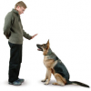 Dog Tricks and Commands