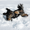 Keeping Your Dog Active in the Winter